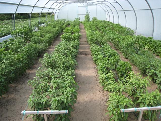 Plantjes moeten ondersteund worden tegen omvallen