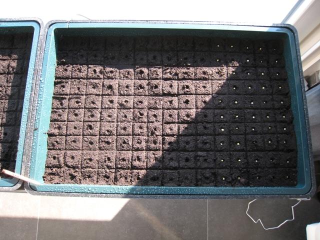 Zaadjes moeten mooi in vakjes in de kweekbakken