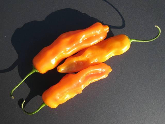 Aji Amarillo, lekkere milde oranje pepers