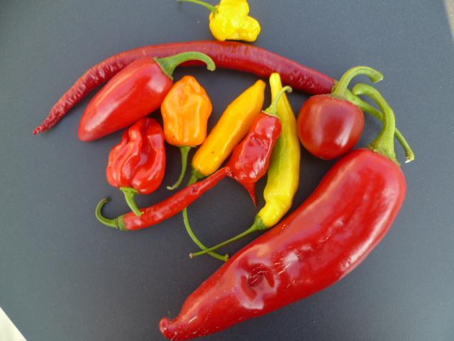 Kunstige pepers