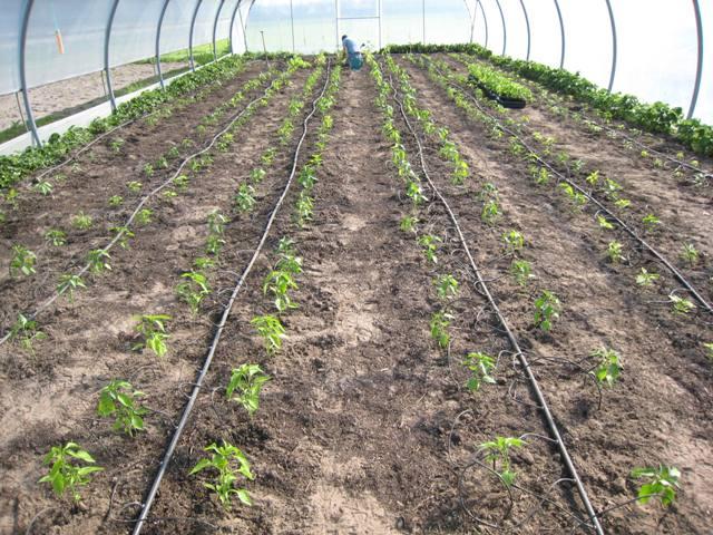 We leggen de laatste hand aan het uitplanten in de tunnel