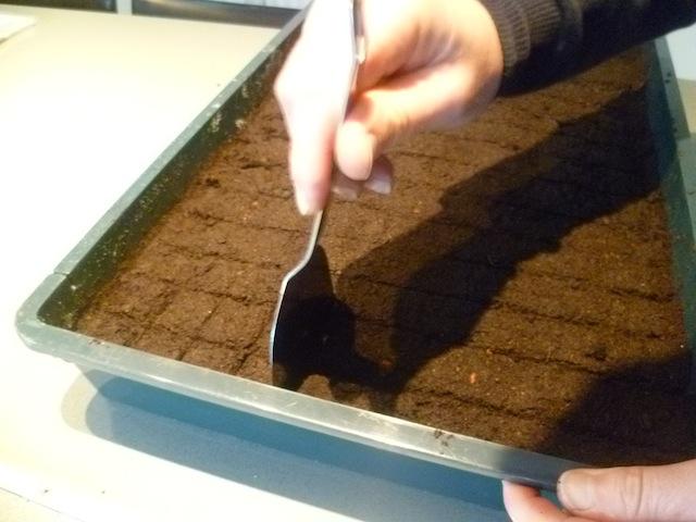 Ik maak een raster in mijn potgrond, vakjes van om en bij de 3,5 cm