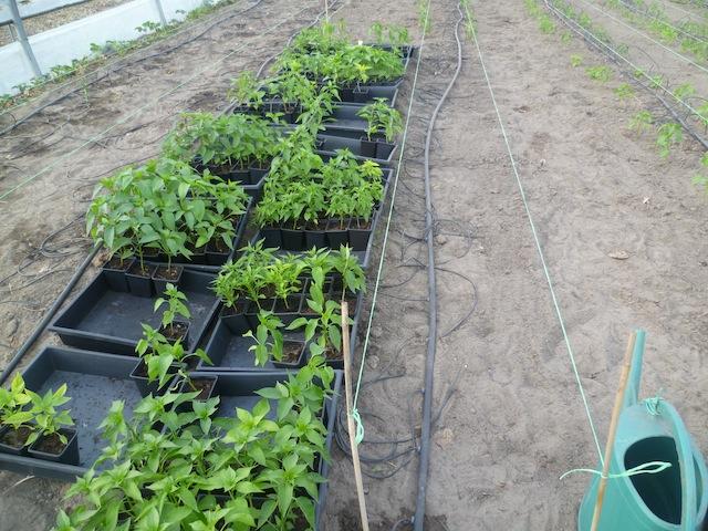 Bak na bak wordt leeggemaakt en uitgeplant