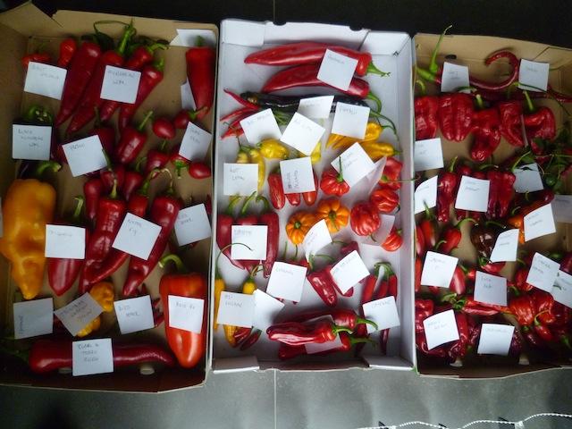 Selectie van chilis voor zaadname