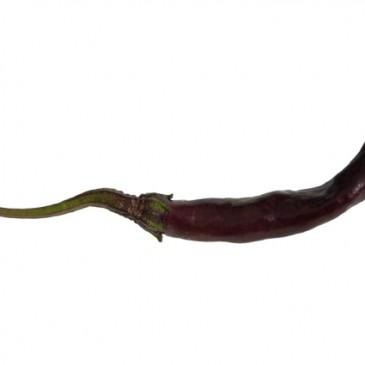 Naga Jolokia Purple