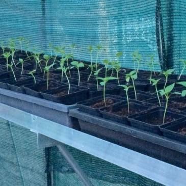 Jonge plantjes staan uitzonderlijk vroeg in de serre